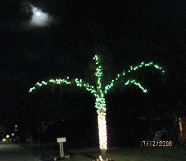 Palmtreebymoonlight